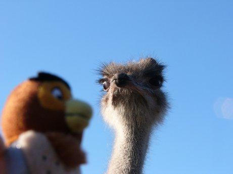 http://lh3.ggpht.com/_7ODftPSZPsY/S5Zt7WCbp-I/AAAAAAAAAdE/GzKsqrb7vX4/ostrich1.jpg