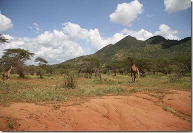 safari amboselli og thsavo 416
