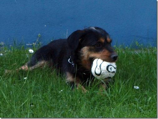 Mein Ball!