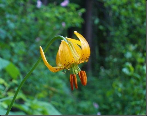 Wildflower Tears