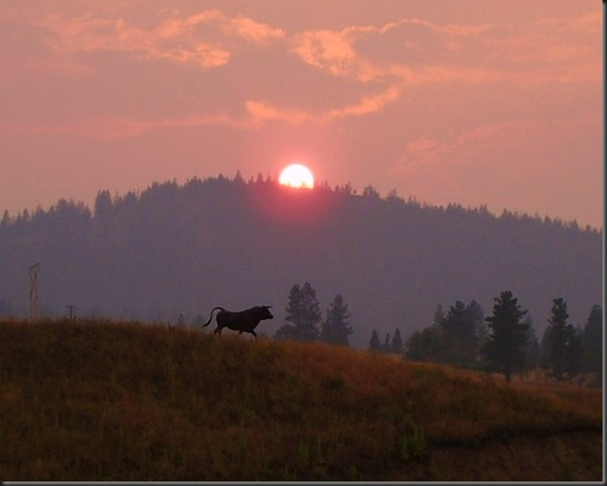 Smoky Setting Sun and Bull