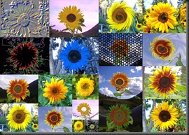 10 10 10 Sunflowers7