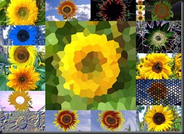 10 10 10 Sunflowers8