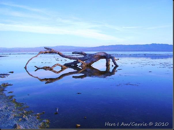 Salton Sea Calendar 2010