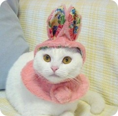 Easter cat