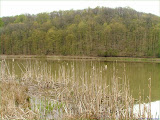 Wanderung zum Rother Stausee, Vegetation - Ende April