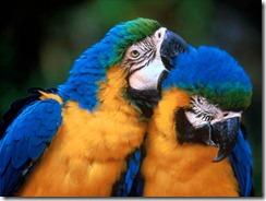 two-parrots