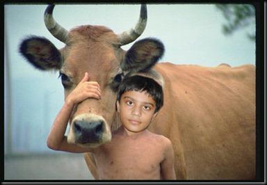 PRANJAL_COW