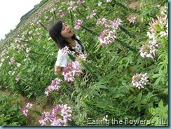 Sunflower Garden (61)