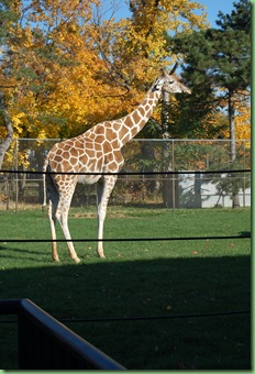 zoo trip 026