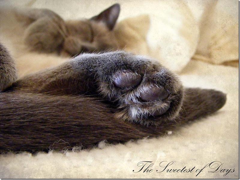 Phin Feet