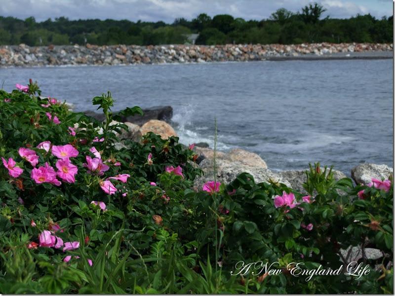 Ocean roses view
