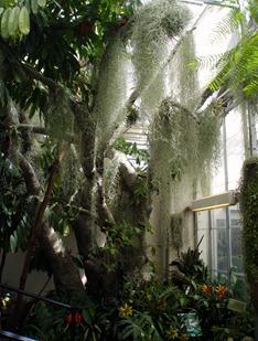 Botanical Garden 16