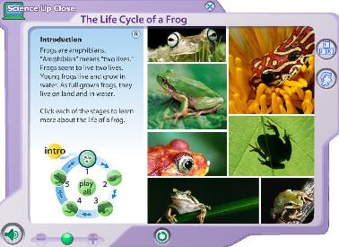 Chiew's CLIL EFL Blog: External Anatomy of a Frog