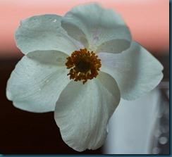 hvit blomst3