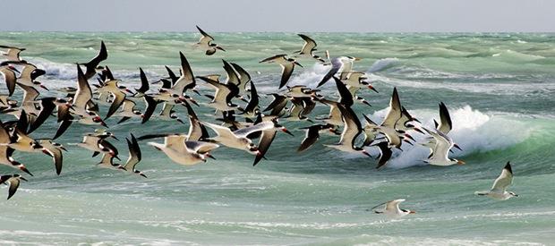 Bird's flock