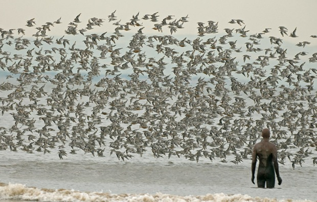 Flock- of-Birds