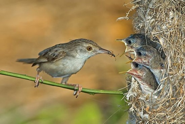 Wildlife-photography-of-birds6