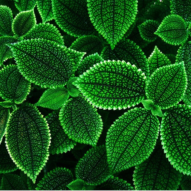 Green-leaf-apple-ipad-wallpaper