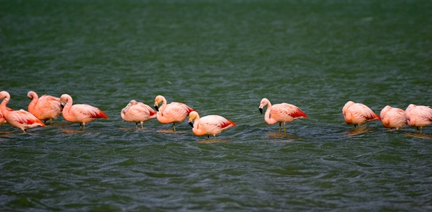 Photography-of-birds-flamingos
