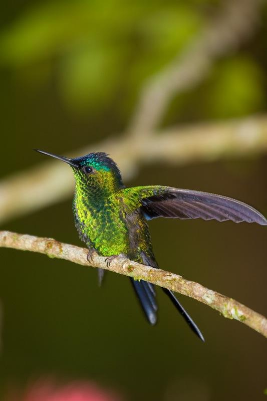 Little-bird-photography-Beija-Flor