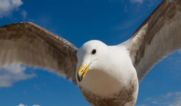 Beautiful-bird-photography
