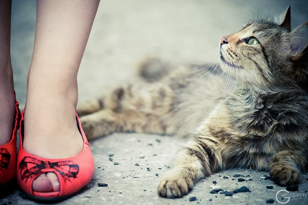 The-girl-and-the-cat-beauty-photography
