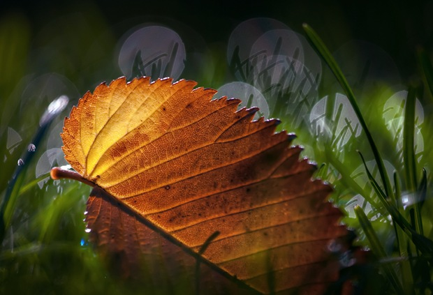 macro-leaf-nature-photography