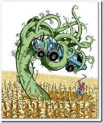 Szabad út az EU-ba_GMO weeds_GMO özvegyek