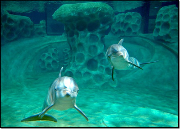 Two curious dolphins