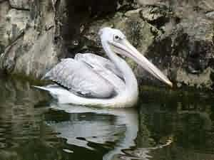 tongtong stork