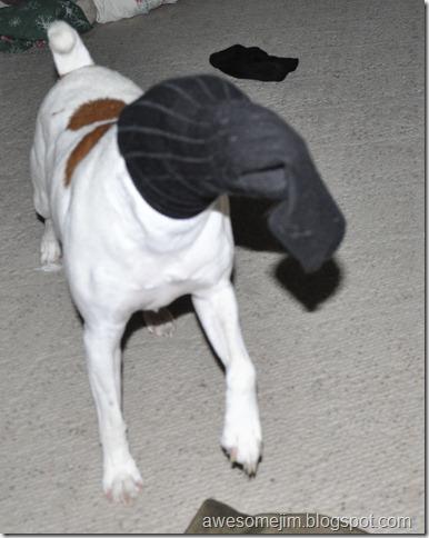 dog sock2