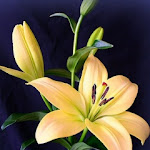 Flowers(3).jpg