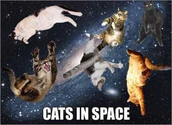 cats_space