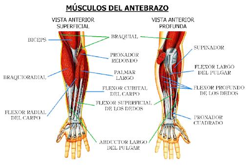 Tecnicas y ejercicios para mejorar el agarre -