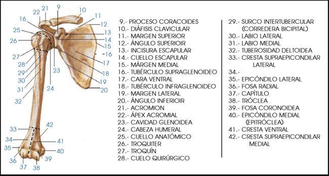 ESPACIO, AMOR Y LOCURA: TENDINITIS DE LA EXTREMIDAD SUPERIOR -I ...