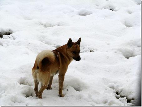 snowsaki