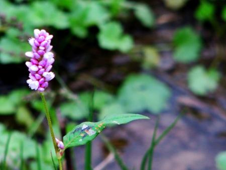 purplewater
