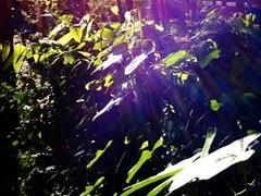 leaveslight