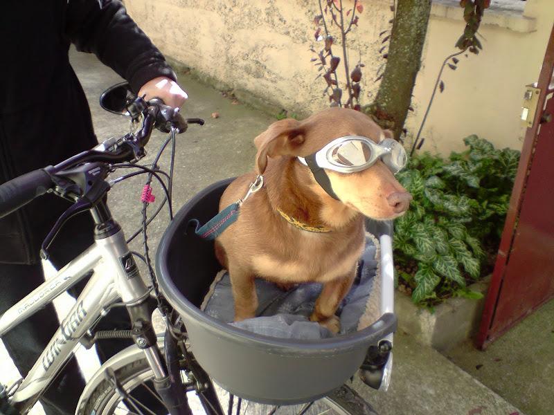 chien motard P061010_12.01%5B01%5D