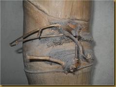 Bambu antik tunas temu - pring pethuk
