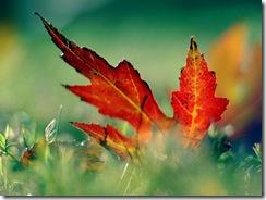 folha-seca-de-outono_canada