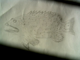 Sketch of a spaced out grouper