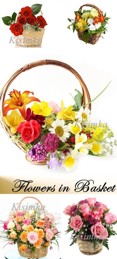 Stock Photo: Flowers in Basket