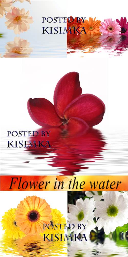 Stock Photo: Flower in the water 3