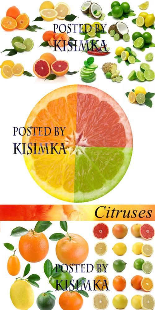 Stock Photo: Citruses