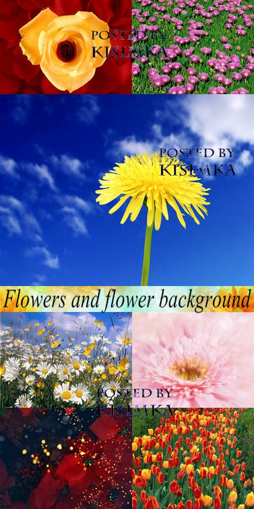 Flowers and flower background. Wallpapers