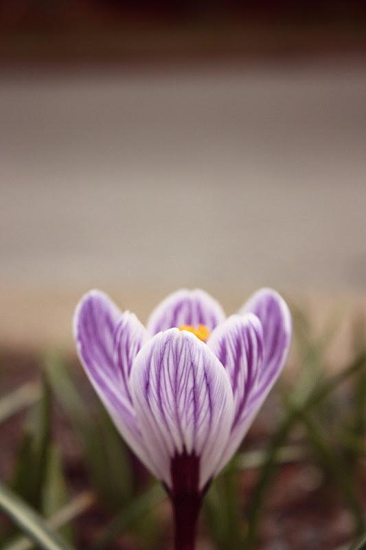 littleflowersimple