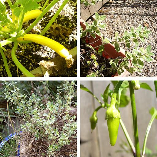 POtHS 5 - Survival Series - Part 02 - The Edible Garden