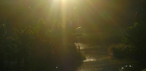 Tarde de sol en el Parque del Este Francisco de Miranda (Caracas, Venezuela)